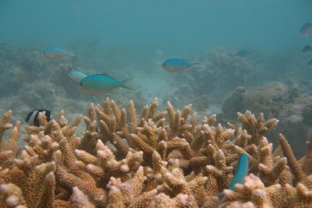 Stats, water quality and the Great Barrier Reef
