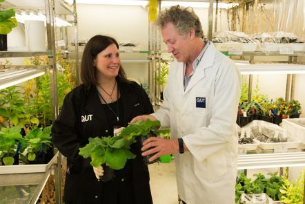 Life-saving tobacco plant