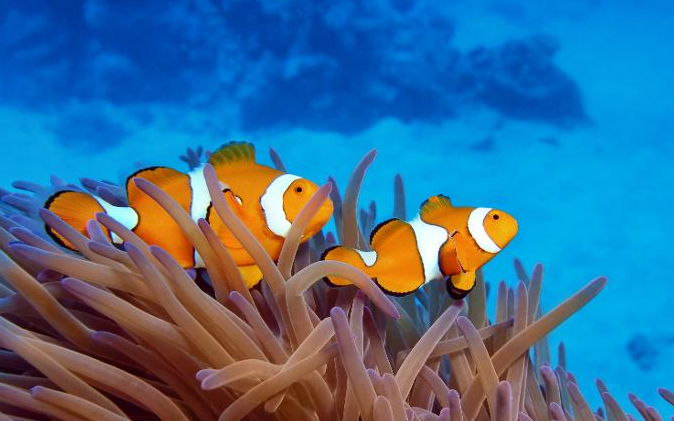 You can do more to help save the reef