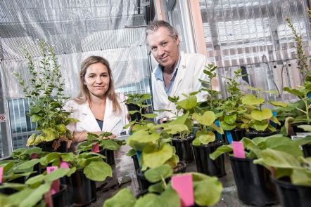 Discoveries in plant genomics